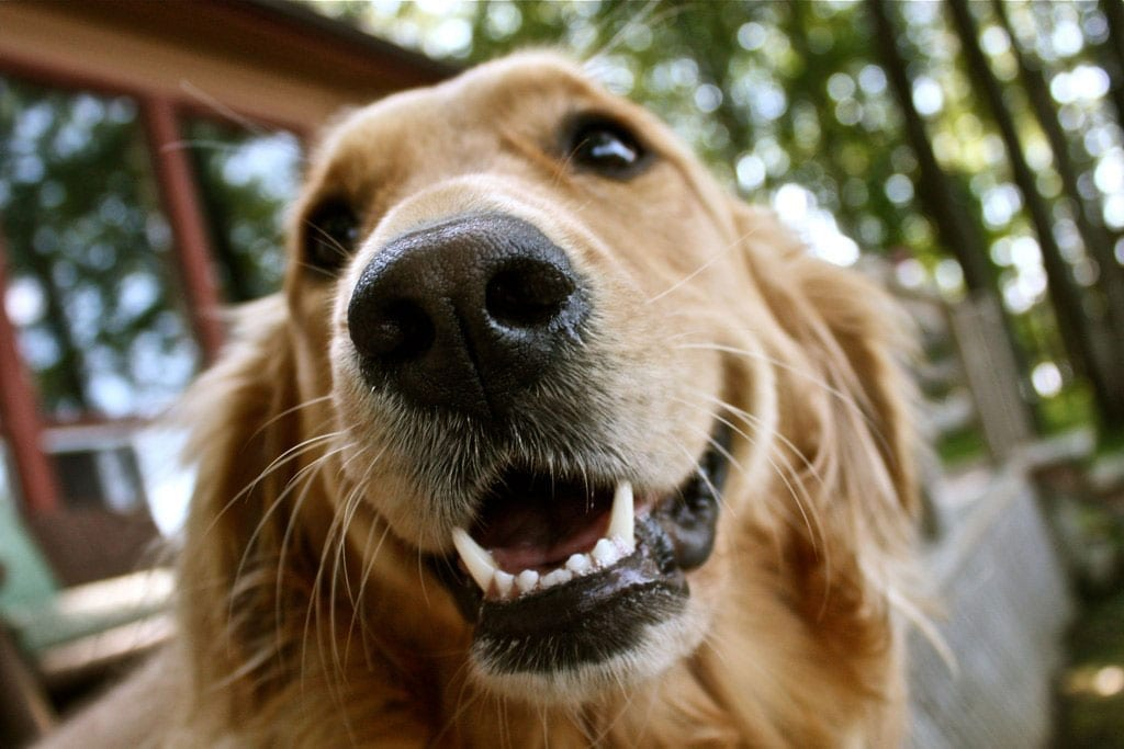 Palm Harbor Pet Teeth Cleaning - Vet Clinic of Palm Harbor - Animal and Bird Medical Center