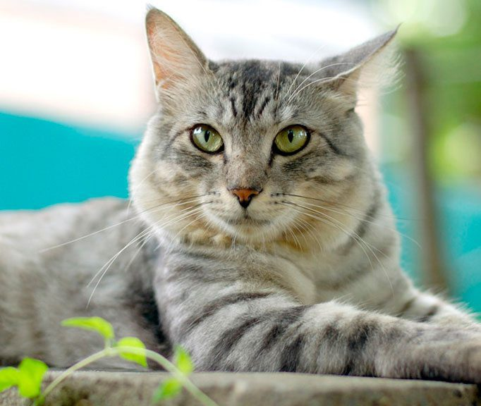 Palm Harbor Vet Cat Care