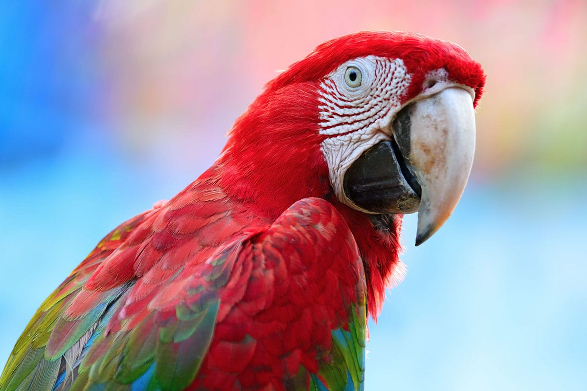 Quality Veterinary Care for your exotic bird in Palm Harbor, FL - Animal & Bird Medical Center vet clinic